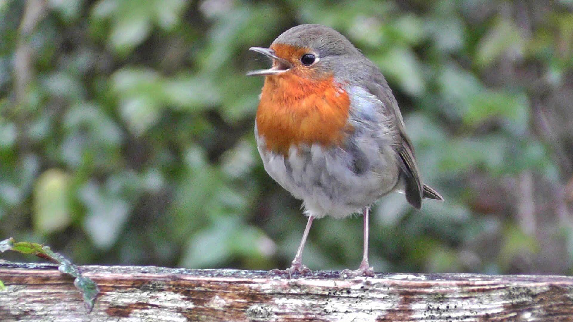 Winterising robin at mylor falmouth